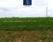 20 Hectareas Agricolas Sobre RP 31.