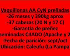 Vaquillonas Preñadas AA CYN