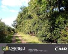 Plantación de Nogales - 1 HA. Junín