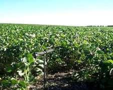 Se Alquilan 450 Has Excelentes para Gruesa en la Pampa