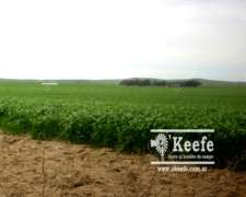 380 Has. Campo en Venta Agricola en Coronel Pringles.