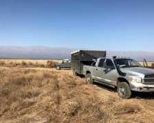 Transporte De Caballos A Todo El País