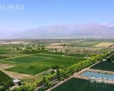8 Has Finca con Viñedos Tunuyán, Mendoza