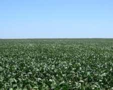 Lamadrid Coronel Suarez Venta Agricola 500 Has Riego