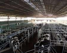 Buscamos Responsable de Producción Tambo en Quines San Luis