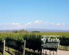 23 Has. Viñedo Premium de Altura en Mendoza