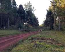 Se Vende Campo con Yerba y Pino. 251 HA. S/ruta. Misiones.