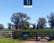 Campo Mixto - Zona Núcleo