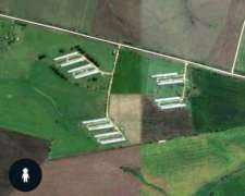 Granja - 12 Galpones + 70 Ha + 4 Casas - 300 Mil Pollos