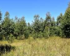 13 Has de Forestación, Estancia Grande - Concordia