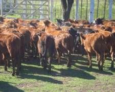 Campo Colonia Pastoril Formosa