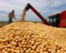 Compro Soja-maiz-arbeja-cebada-soja Curada Presio A Convenir