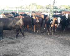 Lote Terneros/as Invernadas 195 Kg
