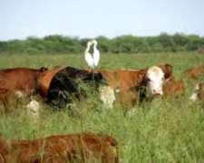 Campo 300 Ha Añatuya Sgo. del Estero , Agrícola Ganadero