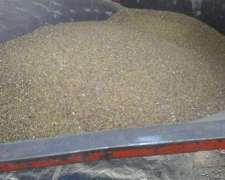 Fardos Y Semilla De Alfalfa Transgénica