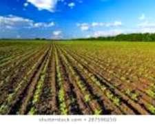 Compro Campo Agricola a Dueño Directo