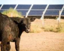 Sistema de Bombeo Solar para Ganadería