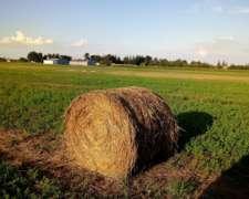 Vendo Rollos de Sorgo- Alfalfa
