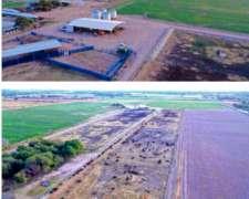 Campo C/feed LOT - Bayo Muerto - Santiago del Estero