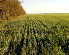 Campo Agricola en Gessler Santa FE