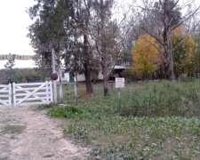 Campo Ideal para Engorde