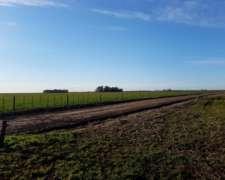 400 Has 80% Agrícolas Roberts (lincoln)