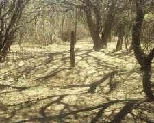 657 Ha en Santiago del Estero