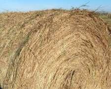 Rollos ( Agropiron,rye Grass y Festuca)