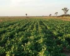 Sachayoj -1300 Has -agricolas -