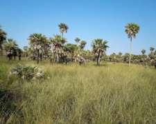 Campo Sobre Ruta 3 Asfaltada Formosa, Gan., a 48 km Pirane.