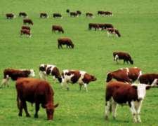 Se Compra Vacas De Cualquier Raza