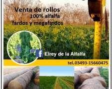 El REY de la Alfalfa