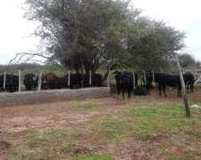 Campo Ganadero De 650 Ha. S/ruta Nº 34 Sgo. Del E.