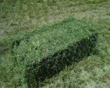 Fardos De Alfalfa Buena Calidad
