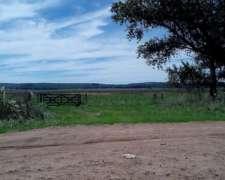 Venta Campo 263 Has 100% Agrícola Lobería Pcia BS AS