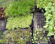 Plantines De Huerta Y Aromáticas X 20 U