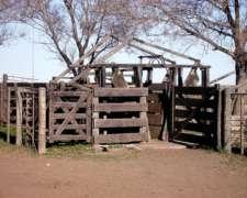 1000ha en Abramo la Pampa