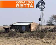 700 Hectáreas en Bernasconi, la Pampa