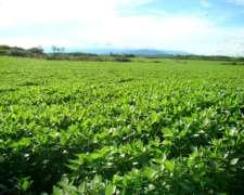 2740 Hectareas Agricolas en Tucuman