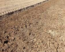 Asesoramiento Técnico de Cultivos Hortícolas