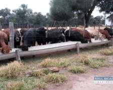 Campo En Venta En La Pcia. Del Chaco. 2.146 Has.