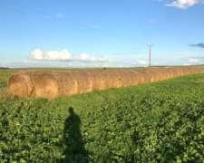 Vendo Rollos de Paja de Cebada y Alpiste