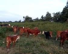 Se Vende Campo Ganadero en Saladas Corrientes