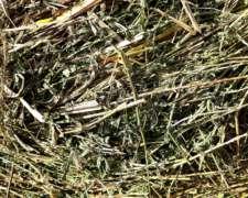 Alfalfa. Rollos De Alfalfa