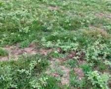 Alquilo Campo Agrícola en Artigas Paraguay