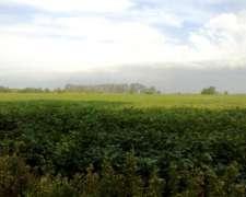 52 Has Agrícolas. Excelente Campo Cerca de Ruta.