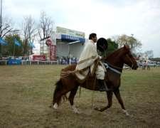 Caballo Peruano de Paso
