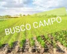 Compro Campo Entre Carrizales y Maciel,aprox 30has