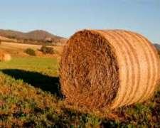 Rollos de Alfalfa Buena Calidad