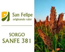 Semilla de Sorgo Híbrido - Sanfe 381 - Forrajero